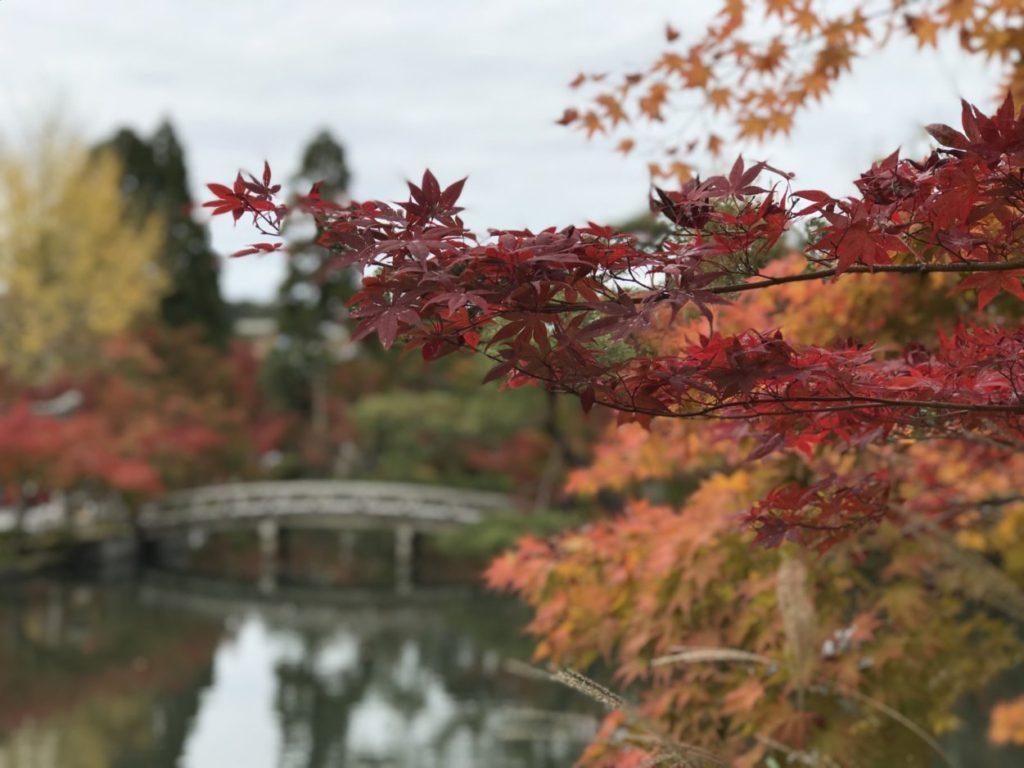 京都・紅葉