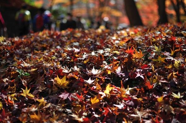 京都・紅葉の落ち葉