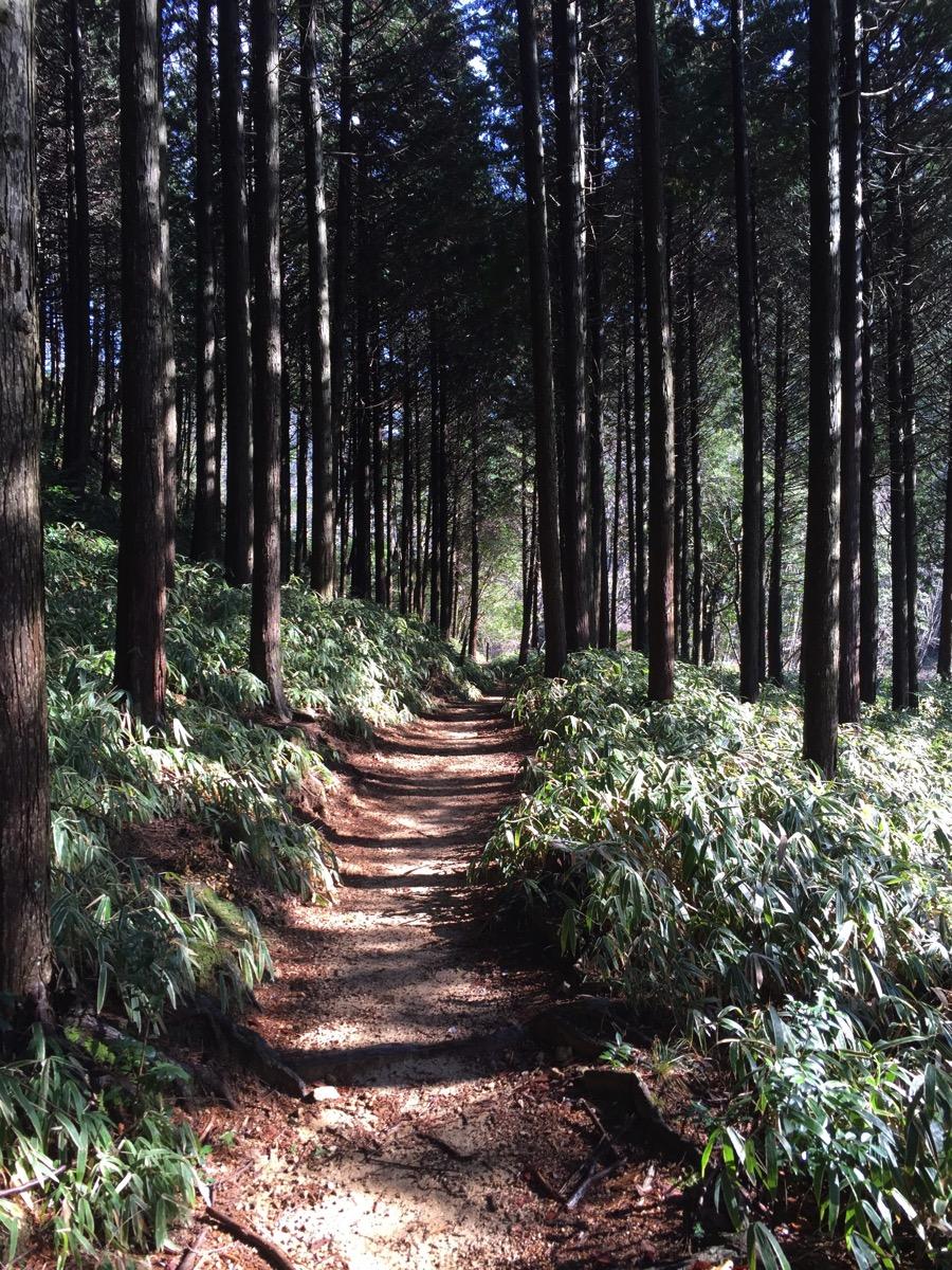 六甲山トレイルランニング