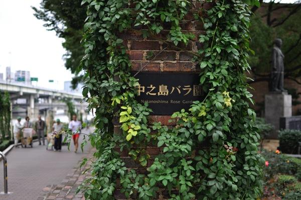 秋のローズウィーク【中之島公園バラ園】7分咲き