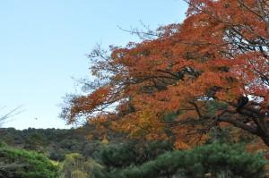 紅葉(京都・清水寺)