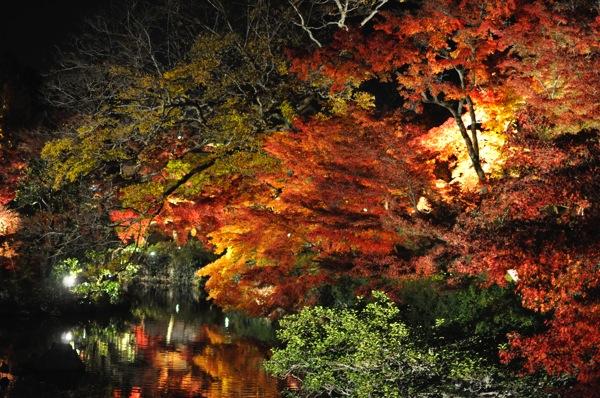 京都・永観堂の紅葉ライトアップ!