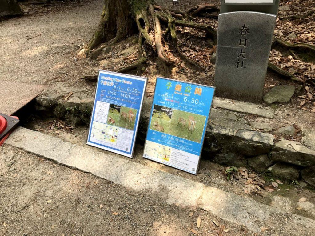 奈良公園の子鹿公開